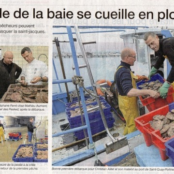 article-coquille-baie-1.jpg